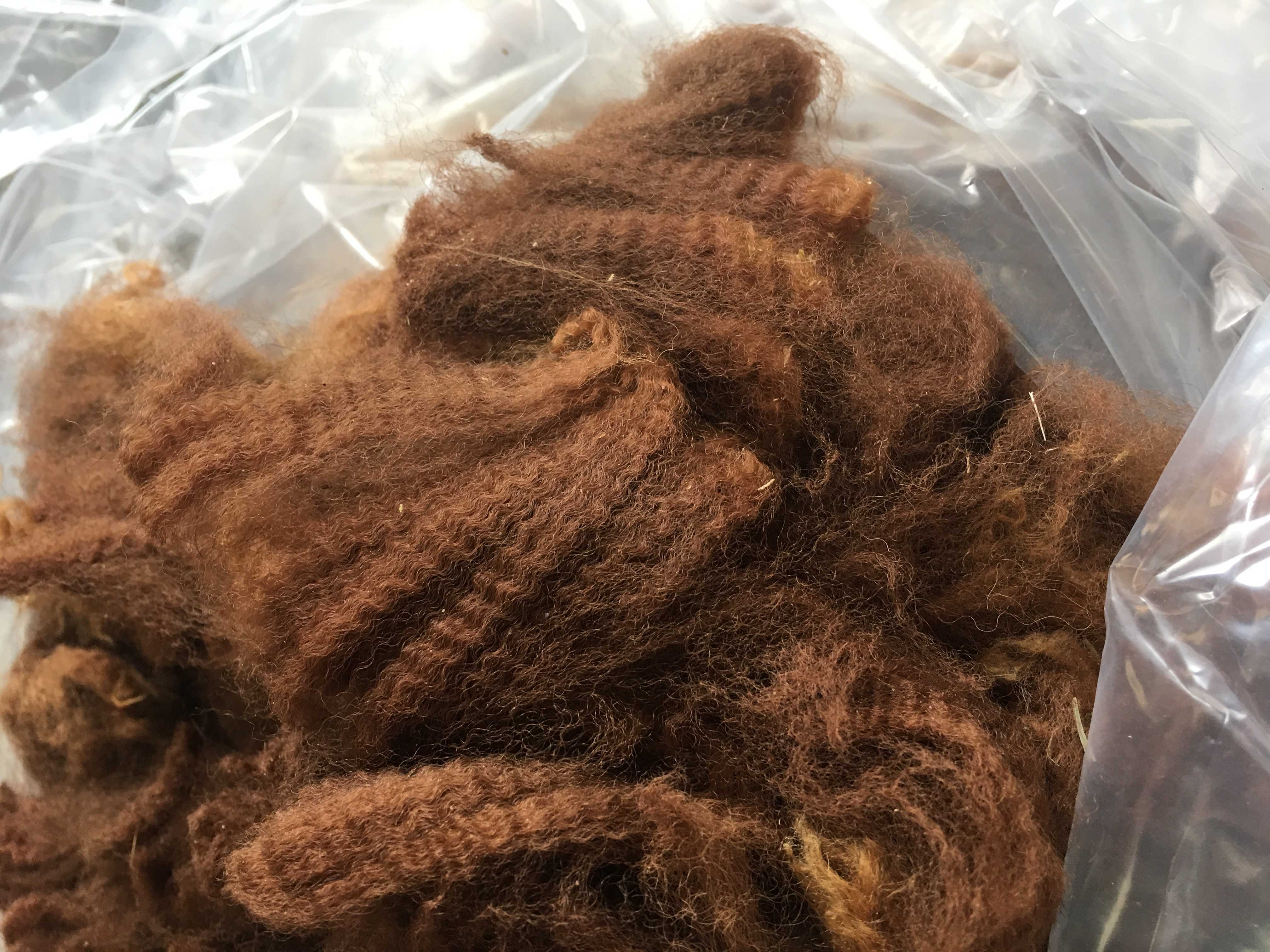 Photo of HAYLILLA LILLY PILLY's fleece