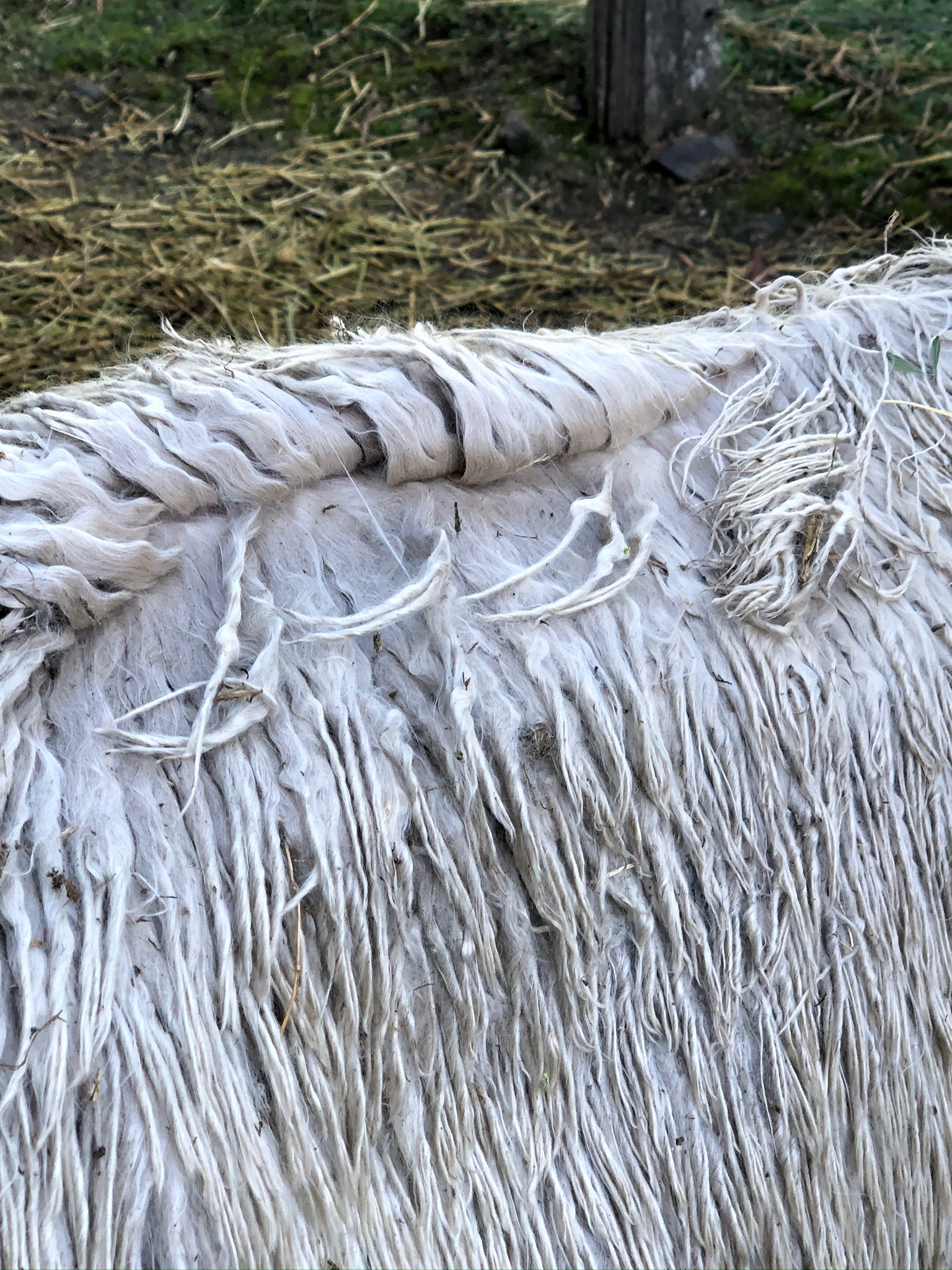 Photo of FERN TREE FLINDERS's fleece
