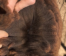 Photo of WOOLUMBIN INALA's fleece