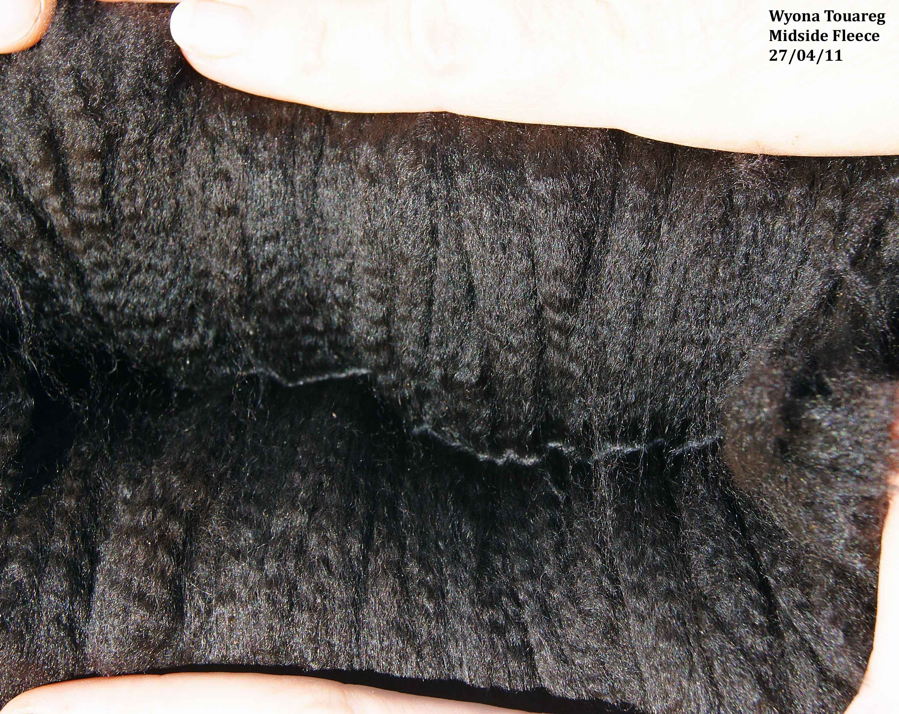 Photo of WYONA TOUAREG's fleece