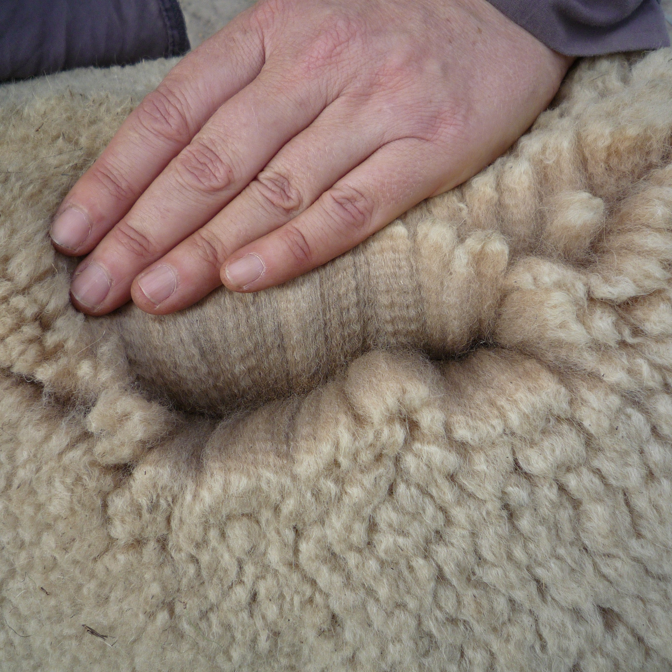 Photo of KALEYBROOK KIRRA's fleece